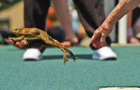 The Calaveras County Fair & Jumping Frog Jubilee — KICKS OFF TODAY!