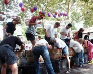 18th Annual Calaveras Grape Stomp